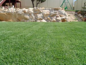 Empire Zoysia Grass 9 Glenview Turf