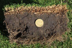 OzTuff Turf Grass 1