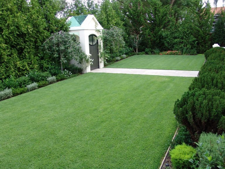 Empire Zoysia Grass Hero Lawn