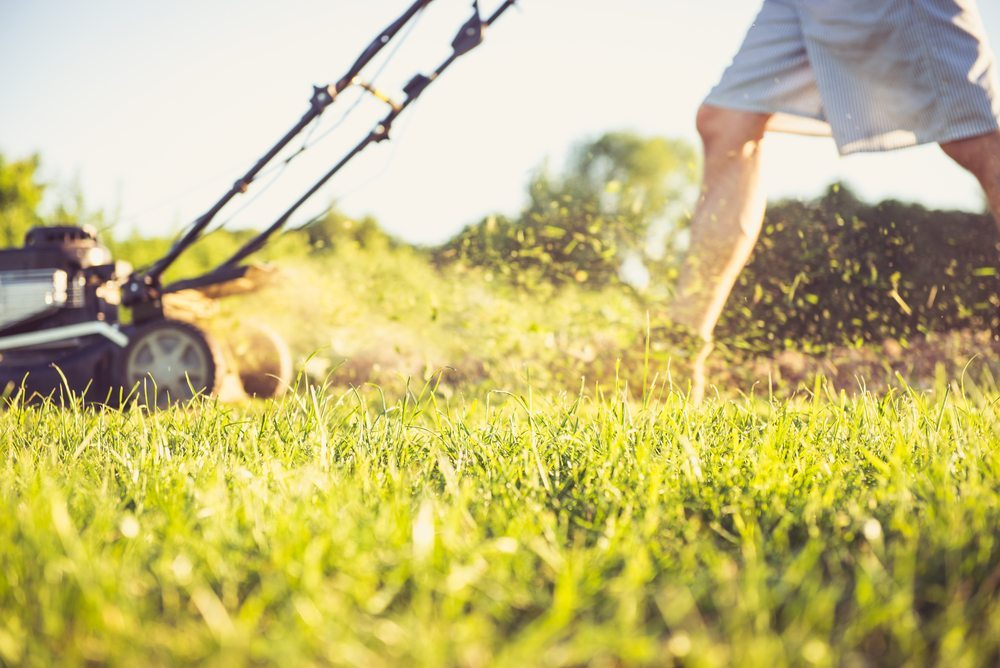 Summer lawn care 5 tips and tricks glenview turf suppliers for How often should you mow your lawn