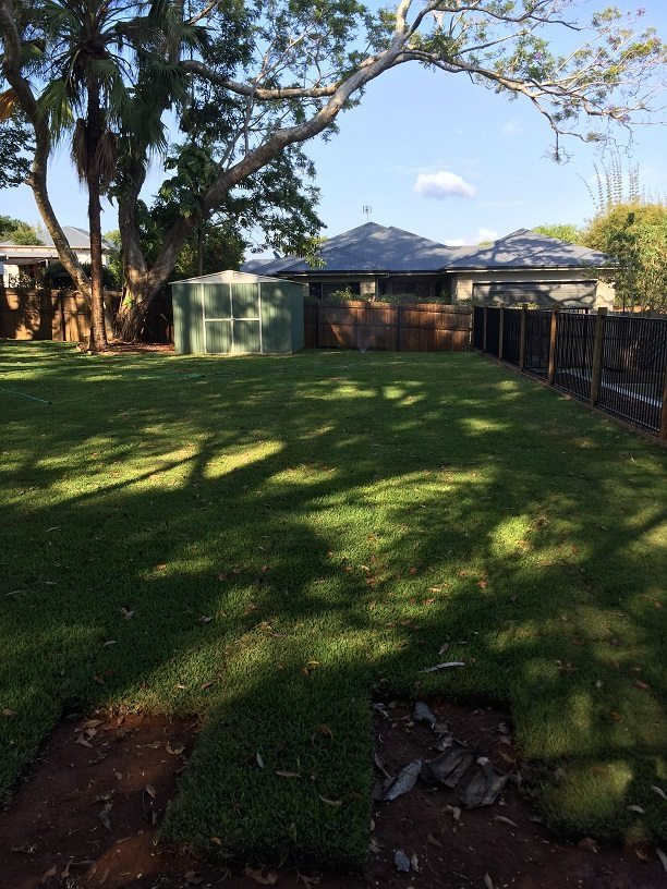 how to look after freshly laid turf