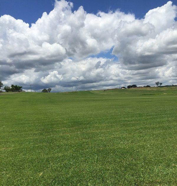A field full of Sir Walter Turf