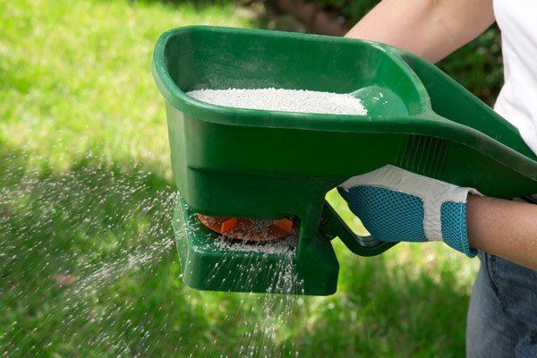 A gardener fertilising their lawn