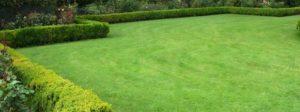 Wintergreen Couch Grass l
