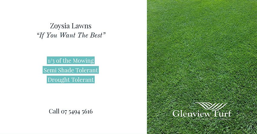 Zoysia Lawns Glenview Turf sw2