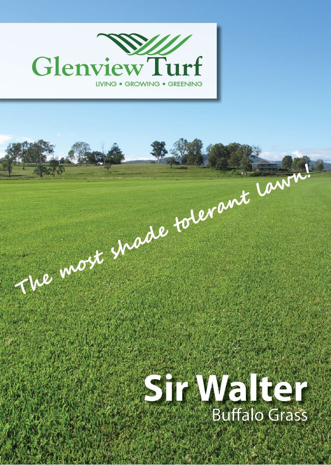 Sir Walter Buffalo Grass Brochure Glenview Turf