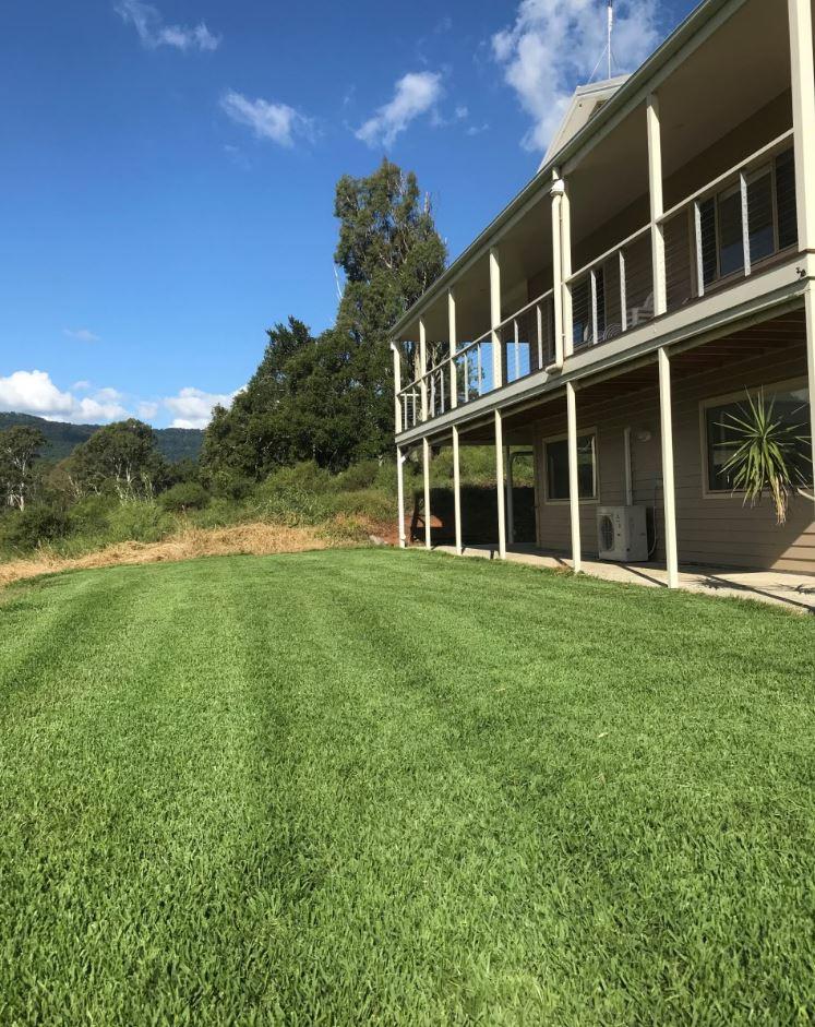 Sir Walter Turf Buffalo Grass 100% Pure Office