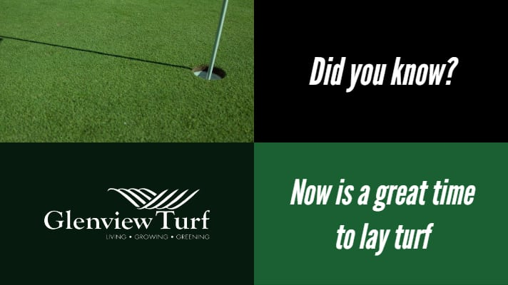 Glenview Turf great time to lay turf