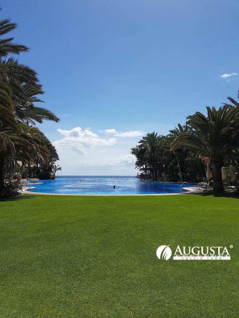 Augusta Zoysia Grass Lawn Pool 1e3 - Glenview Turf