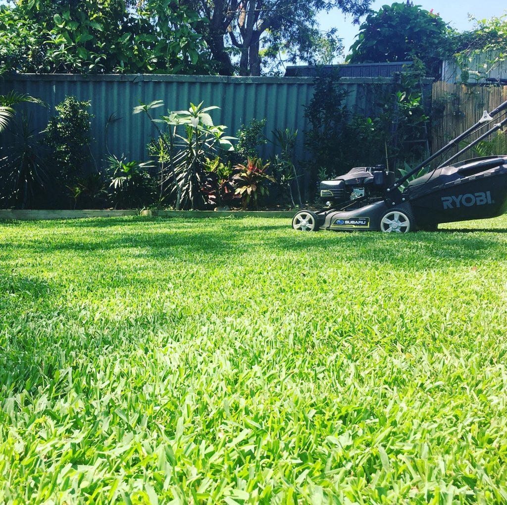 Sir Walter Turf Grass Lawn Glenview Turf 55842741_438084960295310_4551161188968300544_n - Copy
