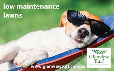 Glenview Turf Low Maintenance Lawns 1200 675 2