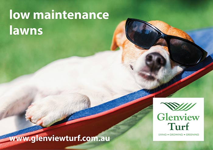 Glenview Turf Low Maintenance Lawns