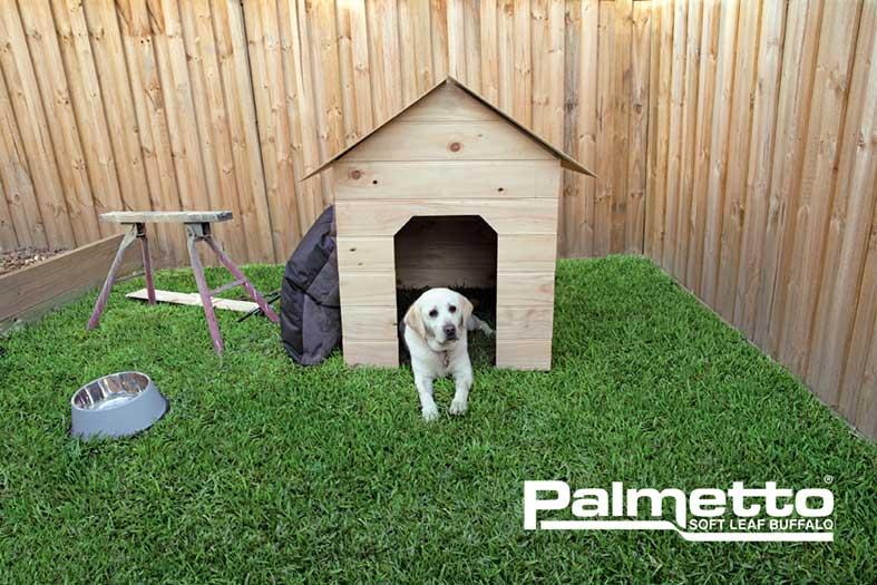 Palmetto-Soft-Leaf-Buffalo-Turf-Dog-e