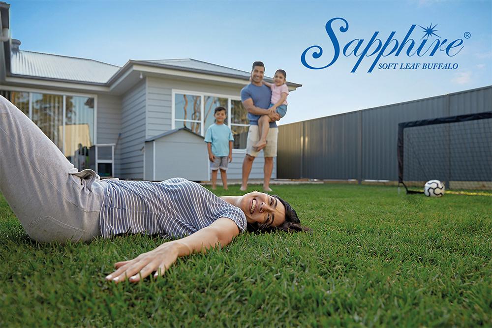 Sapphire-Soft-Leaf-Buffalo-Glenview-Turf