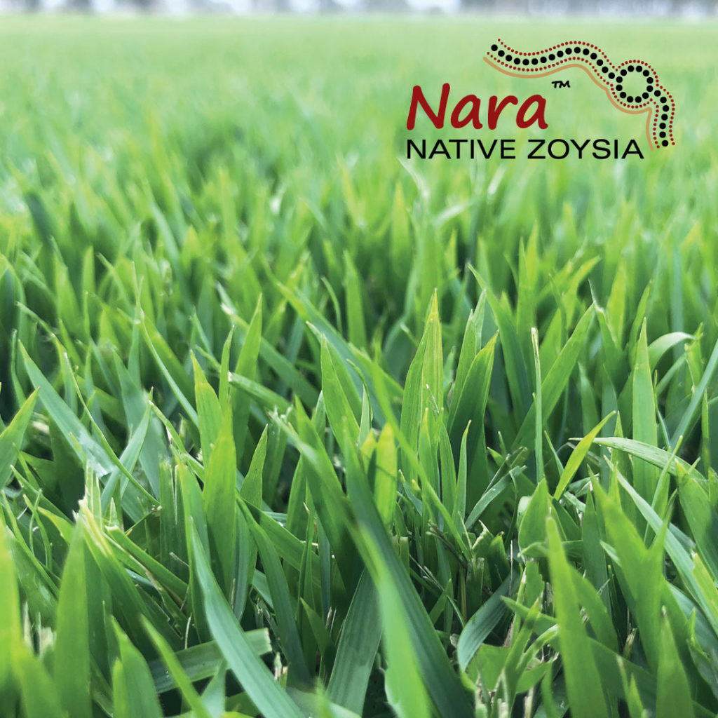 Nara Native Zoysia Turf close