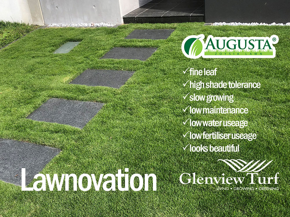 Augusta-Zoysia-Turf-Glenview-Turf-Lawnovation