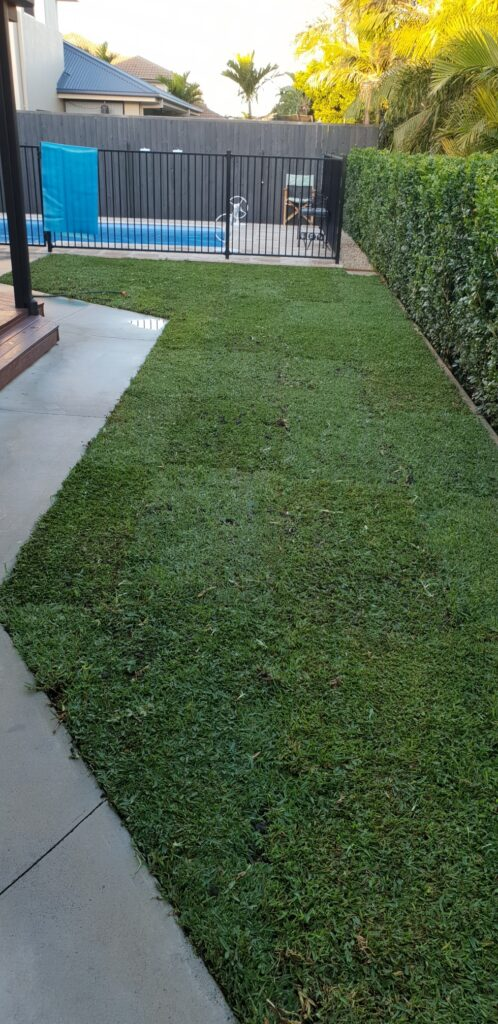 Sir Walter Turf Buffalo Grass Glenview Turf