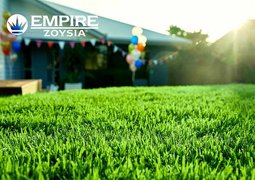 Empire Zoysia Turf - Glenview Turf