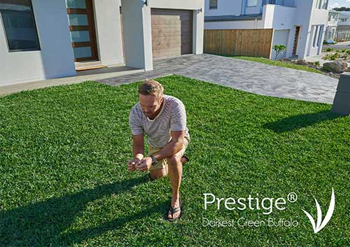 Prestige Darkest Green Buffalo Turf - Glenview Turf