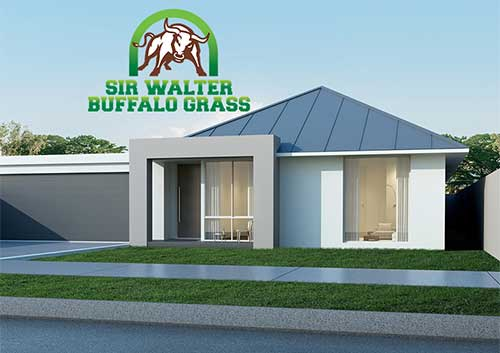 Sir Walter Buffalo Grass Turf - Glenview Turf