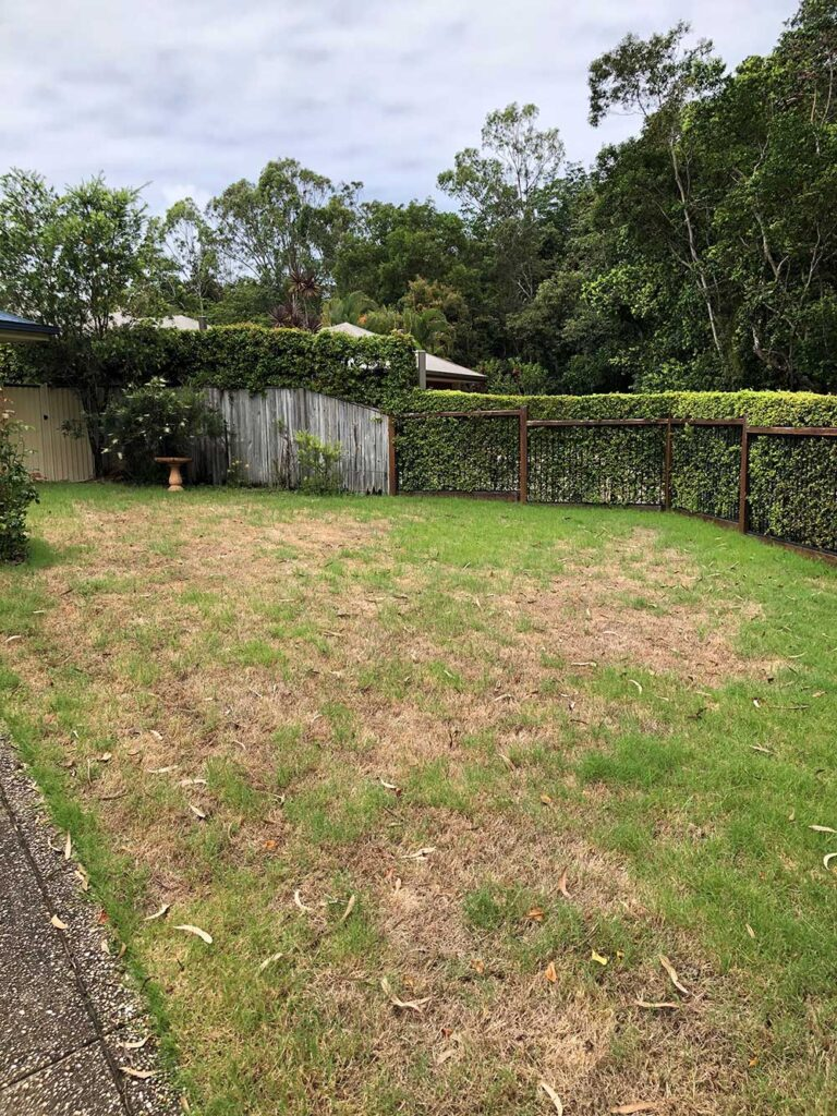 Army Worm Lawn Grub Damage in Turf Grass
