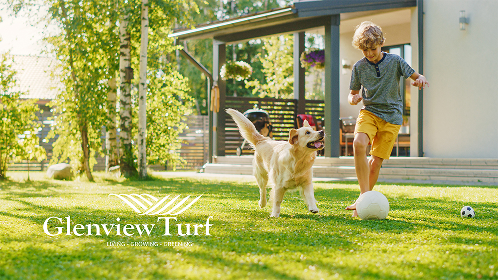 Glenview Turf Shade, Wear and Pets w